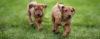 Os primeiros cuidados com um novo filhote - Adestramento de cães e Comportamento Canino