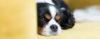 Putz, meu cão está comendo fezes! - Adestramento de cães e comportamento canino