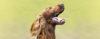 Como lidar com um cão barulhento - Adestramento de cães e comportamento canino