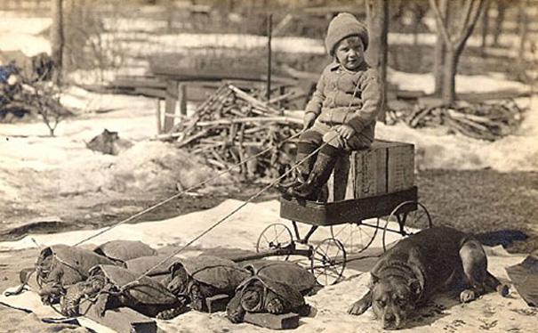 VintageTurtleDog-1