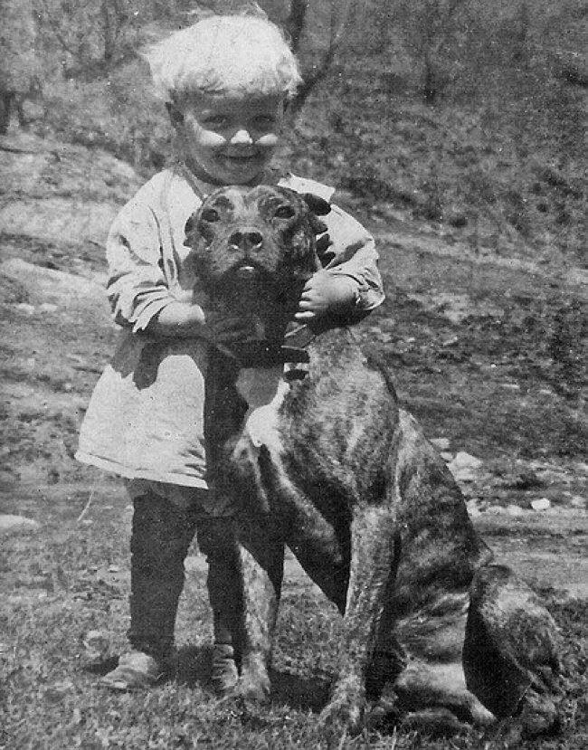 pit-bull-nanny-dog-30