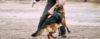 Principais motivos para treinar seu cão para guarda - Cão de Guarda