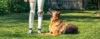 Adestramento de cães - Perguntas e Respostas sobre Adestramento de Cães e Comportamento Canino