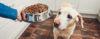 Alimentação de cães - Perguntas e Respostas sobre Adestramento de Cães e Comportamento Canino
