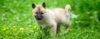 Cão filhote - Perguntas e Respostas sobre Adestramento de Cães e Comportamento Canino