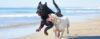 Cão dominante - Perguntas e Respostas sobre Adestramento de Cães e Comportamento Canino