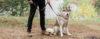 A importância de educar o seu cão - Adestramento de cães e comportamento canino