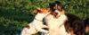 Os nossos cães não estão de brincadeira! - Adestramento de cães e comportamento canino