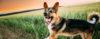 Relatos de casos de agressão: Entenda os motivos - Adestramento de cães e Comportamento Canino