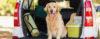 Cães e automóveis – Superando traumas - Adestramento de cães e Comportamento Canino