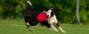 Como os cães aprendem? - Adestramento de cães e comportamento canino