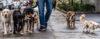 O método de adestramento que eu utilizo com meus cães - Adestramento de cães e comportamento canino