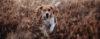 Seu cão respeita portas abertas? - Adestramento de cães e Comportamento Canino