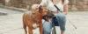Dicas práticas de como utilizar o enforcador em seu cão - Adestramento de cães e Comportamento Canino