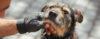 Cão mais velho não aprende? - Adestramento de cães e Comportamento Canino