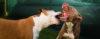 Tratamento diferenciado entre cães gera CONFLITOS!