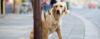 Não induza seu cão ao ERRO! - Adestramento de cães e comportamento canino