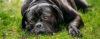 Seu cão está DESMOTIVADO? - Adestramento de cães e comportamento canino