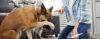 Cães não erram! - Adestramento de cães e Comportamento Canino