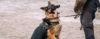 Cão de esporte X Cão de defesa - Cão de Guarda