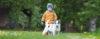 Os cuidados no convívio de CÃES E CRIANÇAS - Adestramento de cães e comportamento canino