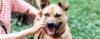 Sinais iniciais de DOMINÂNCIA - Adestramento de cães e comportamento canino