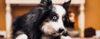 Quebrando padrões de comportamento - Adestramento de cães e comportamento canino