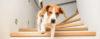 Não deixe o seu cachorro ansioso! - Adestramento de cães e comportamento canino