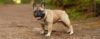 A triste verdade sobre o rabo de saca-rolhas - Raças de cachorros