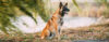 Como mostrar para o seu cão quem é que MANDA! - Adestramento de cães e Comportamento Canino