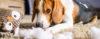 Cachorro com comportamento destrutivo! - Adestramento de cães e comportamento canino