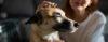 Você acha o seu cachorro obediente? - Adestramento de cães e comportamento canino