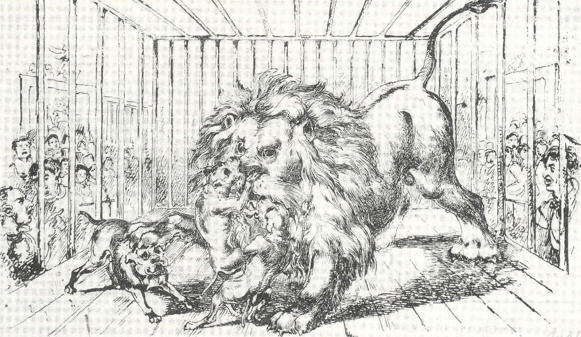 pitbull lutando contra leão