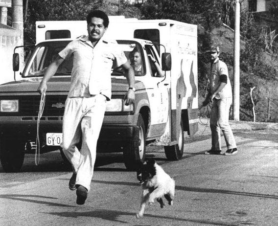 cachoro fugindo da carrocinha