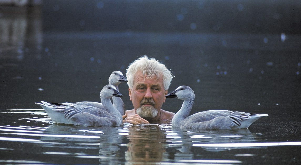 Konrad Lorenz nadando com gansos