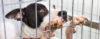 Dicas práticas para construir um CANIL - Adestramento de cães e Comportamento Canino