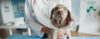 Castração de Cães – A verdade não contada! - Adestramento de cães e comportamento canino