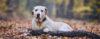 Não seja INJUSTO com seu cão! - Adestramento de cães e Comportamento Canino