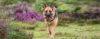 O poder do CONDICIONAMENTO canino - Adestramento de cães e Comportamento Canino