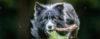 Como lidar com um CACHORRO que ROSNA na hora da comida? - Adestramento de cães e Comportamento Canino