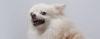 Cuidado, cachorro que rosna pode morder! - Adestramento de cães e comportamento canino