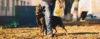 Você quer se tornar um adestrador de cães? - Adestramento de cães e comportamento canino