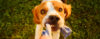 Seu cachorro quer chamar sua atenção?