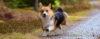 O seu cachorro vem quando chamado? - Adestramento de cães e Comportamento Canino