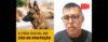 A Vida Social do Cão de Proteção. - Cão de Guarda